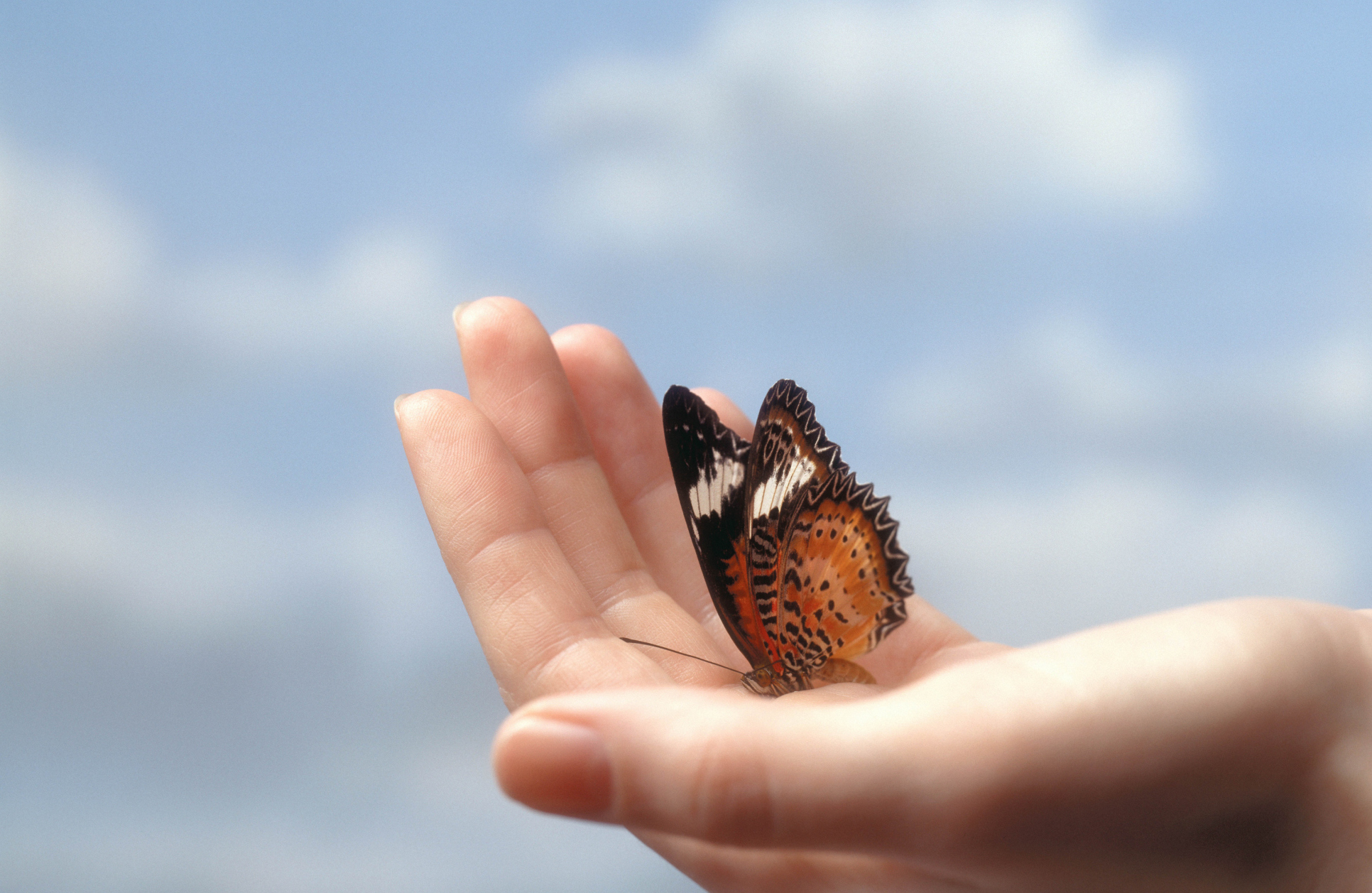 Butterfly in hand pictures Butterfly (The Hollies album) - Wikipedia